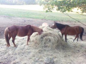 Ubytování s koňmi