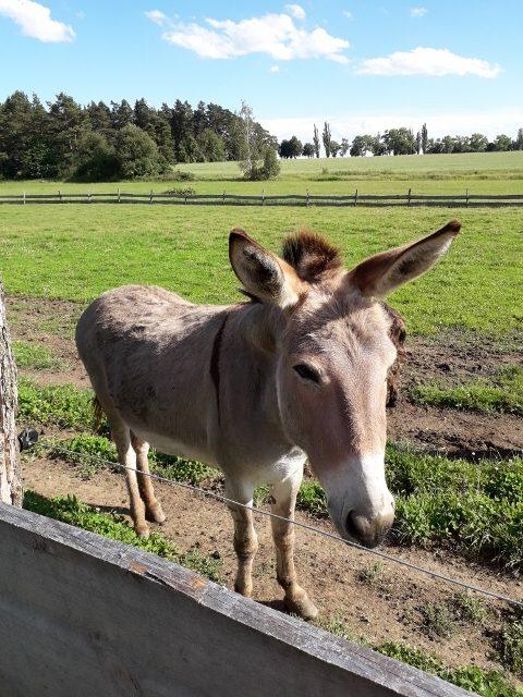 Zvířata u Biofarmy v Touškovském lese